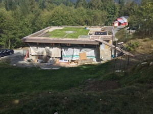 """I this what they mean by a """"Green"""" roof?"""